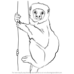 How to Draw a Lemur on a Tree