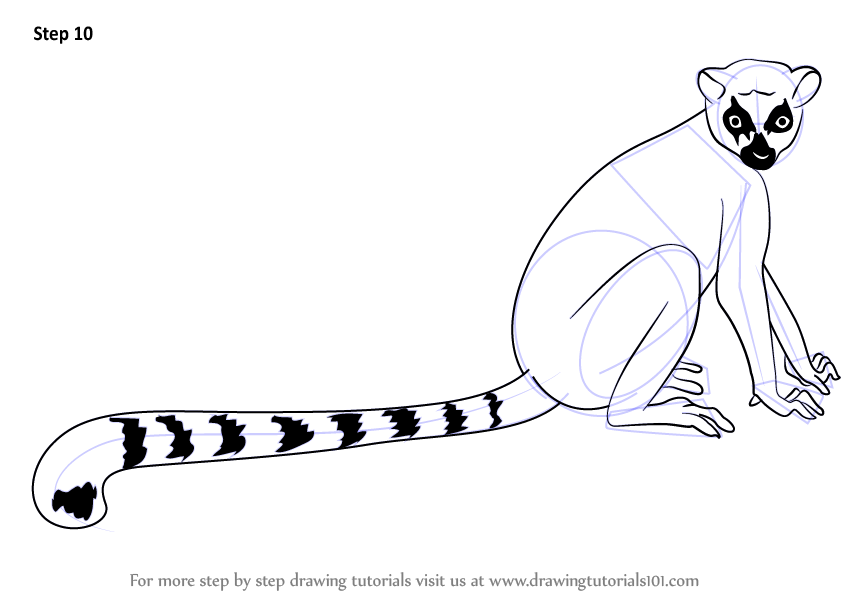 Learn How To Draw A Ring Tailed Lemur Lemurs Step By