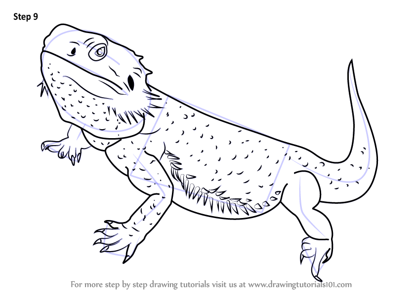 Step By Step How To Draw A Bearded Dragon