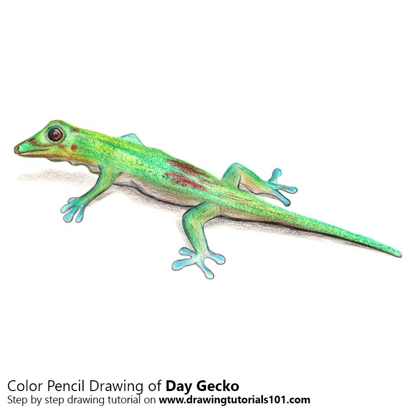 Day Gecko Color Pencil Drawing