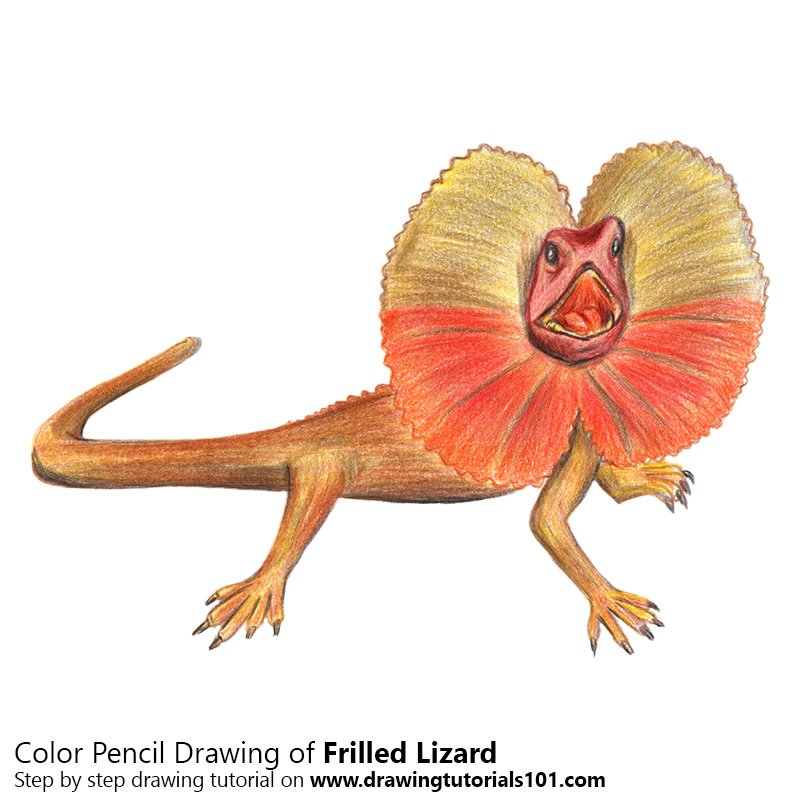 Frilled Lizard Color Pencil Drawing