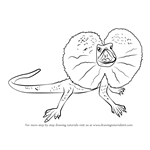 How to Draw a Frilled Lizard