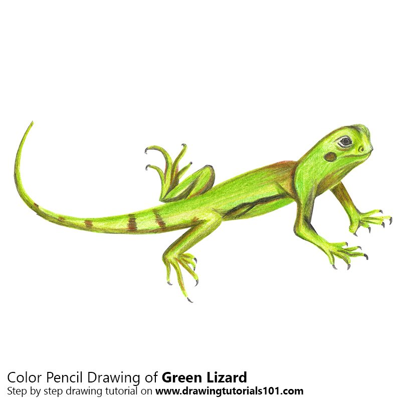 Colorful Lizard Drawing | www.pixshark.com - Images ...