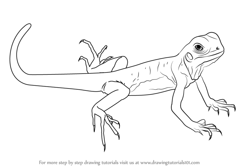 learn how to draw a green lizard lizards step by step drawing tutorials