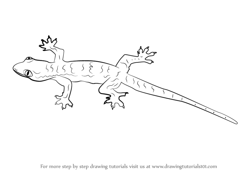 Line Drawing Lizard : Learn how to draw a lizard lizards step by