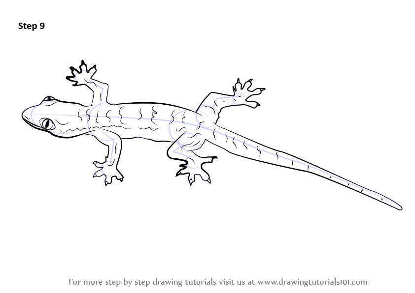 learn how to draw a lizard  lizards  step by step