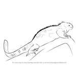 How to Draw a Marine Iguana