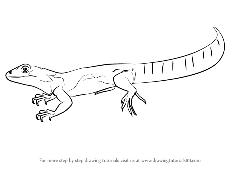 learn how to draw an oaxacan spiny