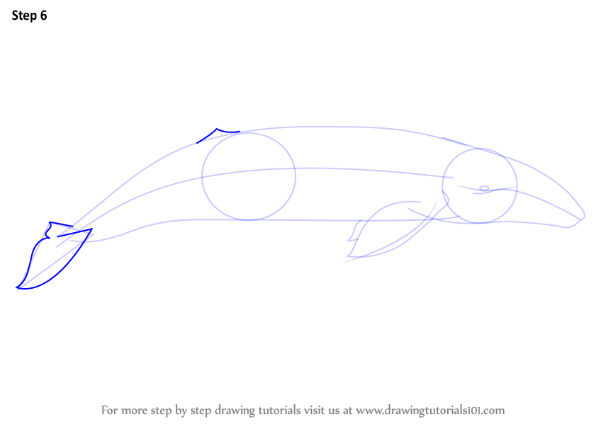 Learn How To Draw A Gray Whale Marine Mammals Step By Step