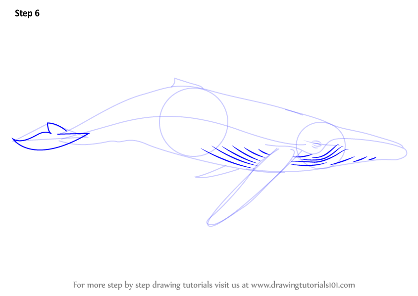 Humpback Whale Line Drawing : Learn how to draw a humpback whale marine mammals step