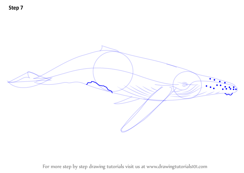 Humpback Whale Line Drawing : Step by how to draw a humpback whale