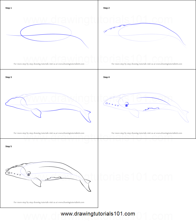 How to Draw a Right Whale printable