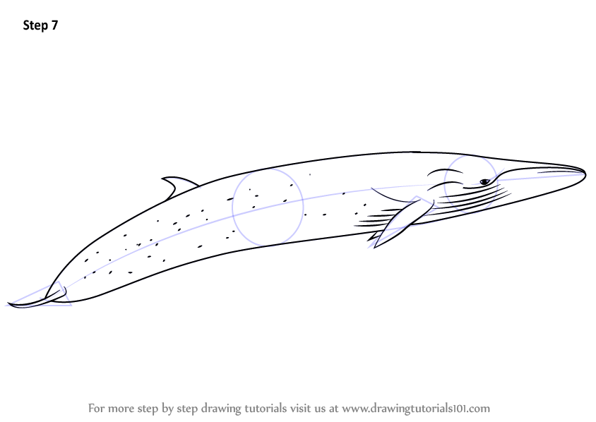 how to draw a whale step by step