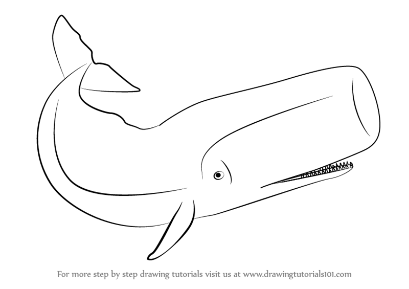 sperm Drawing whale of