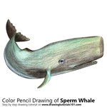 How to Draw a Sperm Whale