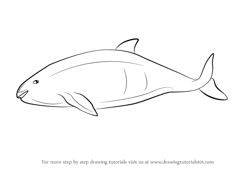 Learn How To Draw A Vaquita Marine Mammals Step By Step