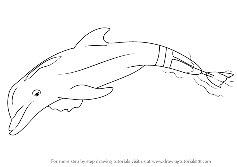 Learn How to Draw Winter the Dolphin