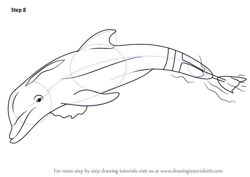 Learn How To Draw Winter The Dolphin Marine Mammals Step Winter The Dolphin Coloring Pages