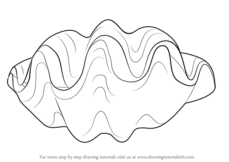 Learn How to Draw a Giant Clam (Mollusks) Step by Step ...
