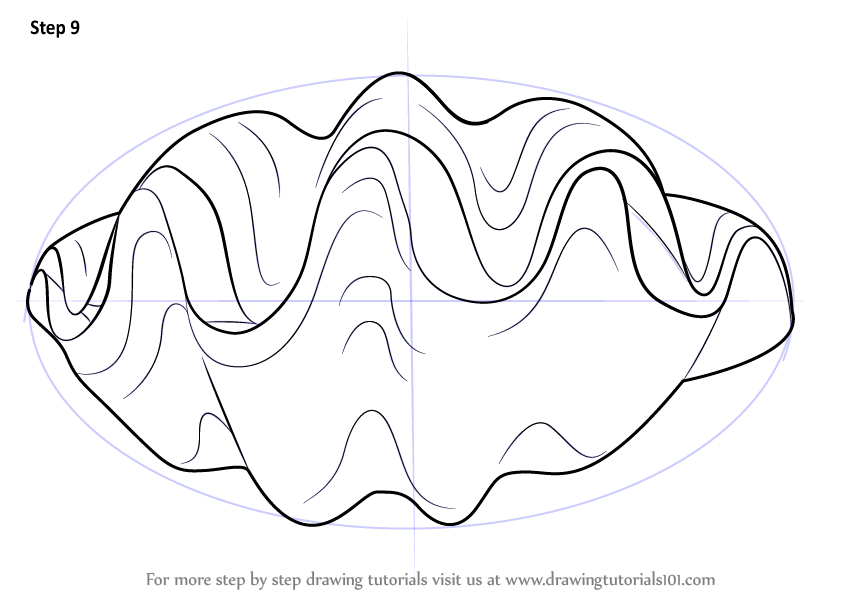 Step By Step How To Draw A Giant Clam