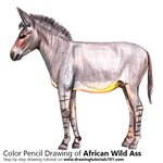 How to Draw an African Wild Ass
