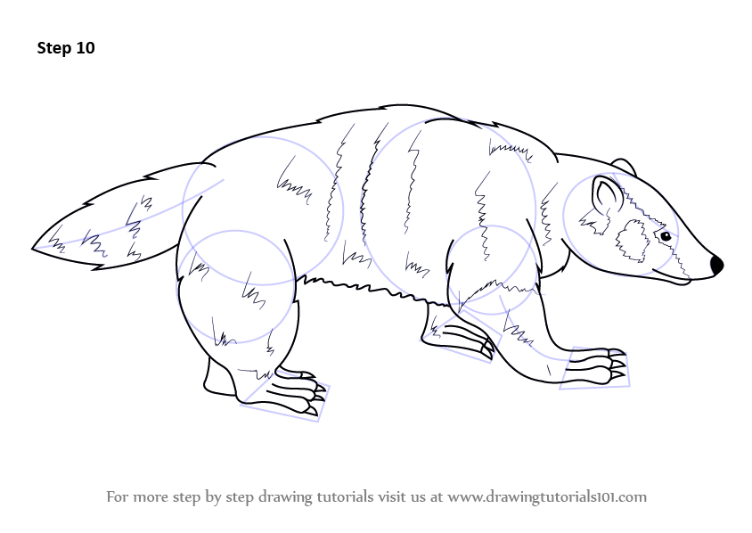 how to draw a american alligator step by step