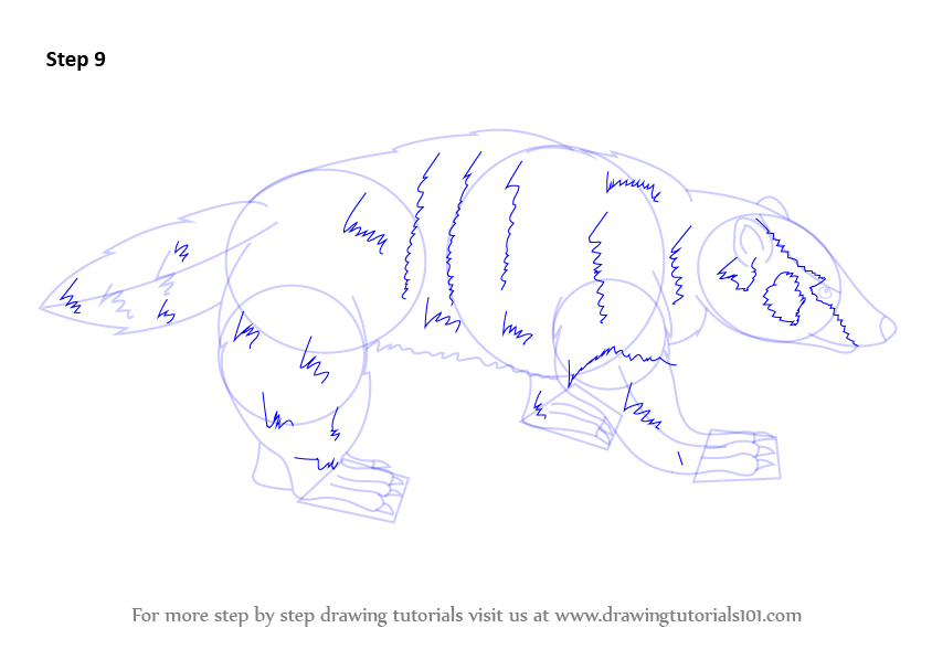learn how to draw an american badger other animals step