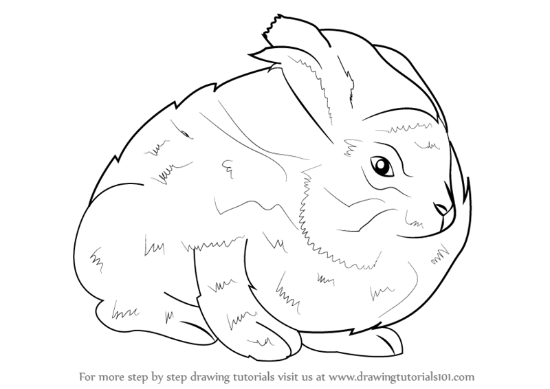Angora Rabbit Outline Drawing