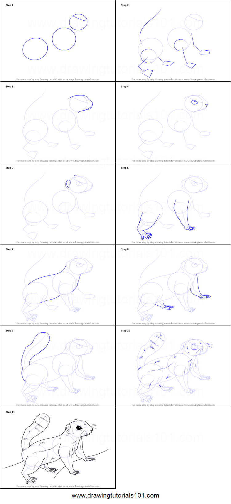 How to Draw an Antelope squirrel printable step by step drawing
