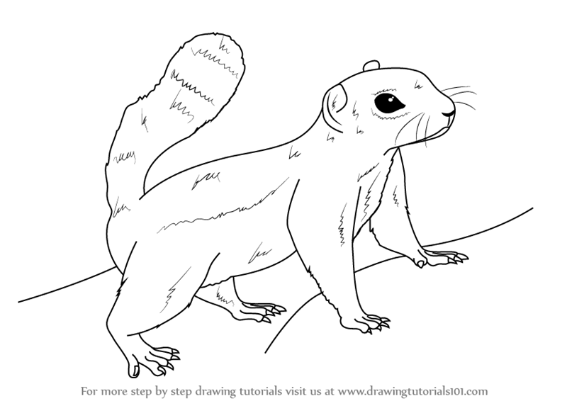 Learn How to Draw an Antelope squirrel Other Animals Step by