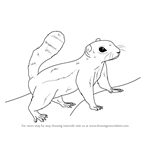How to Draw an Antelope squirrel