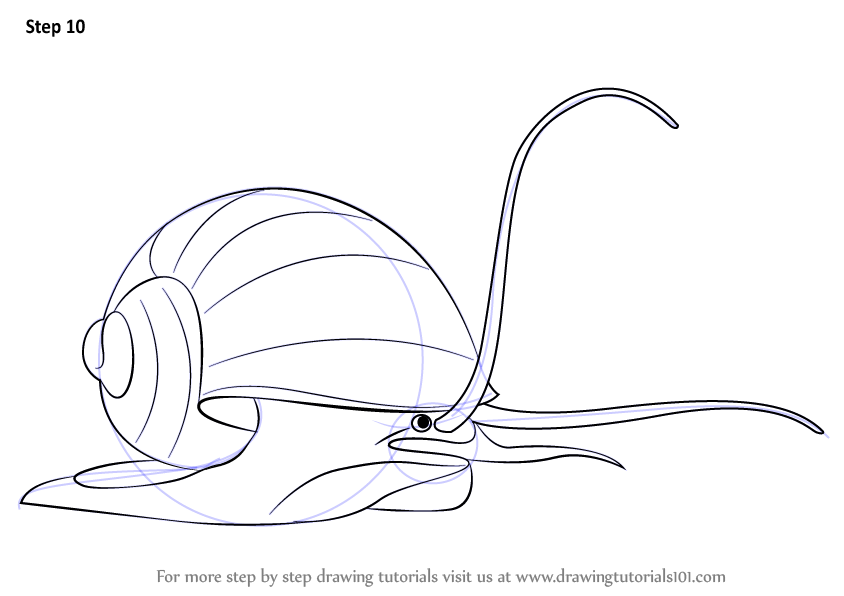learn how to draw an apple snail  other animals  step by