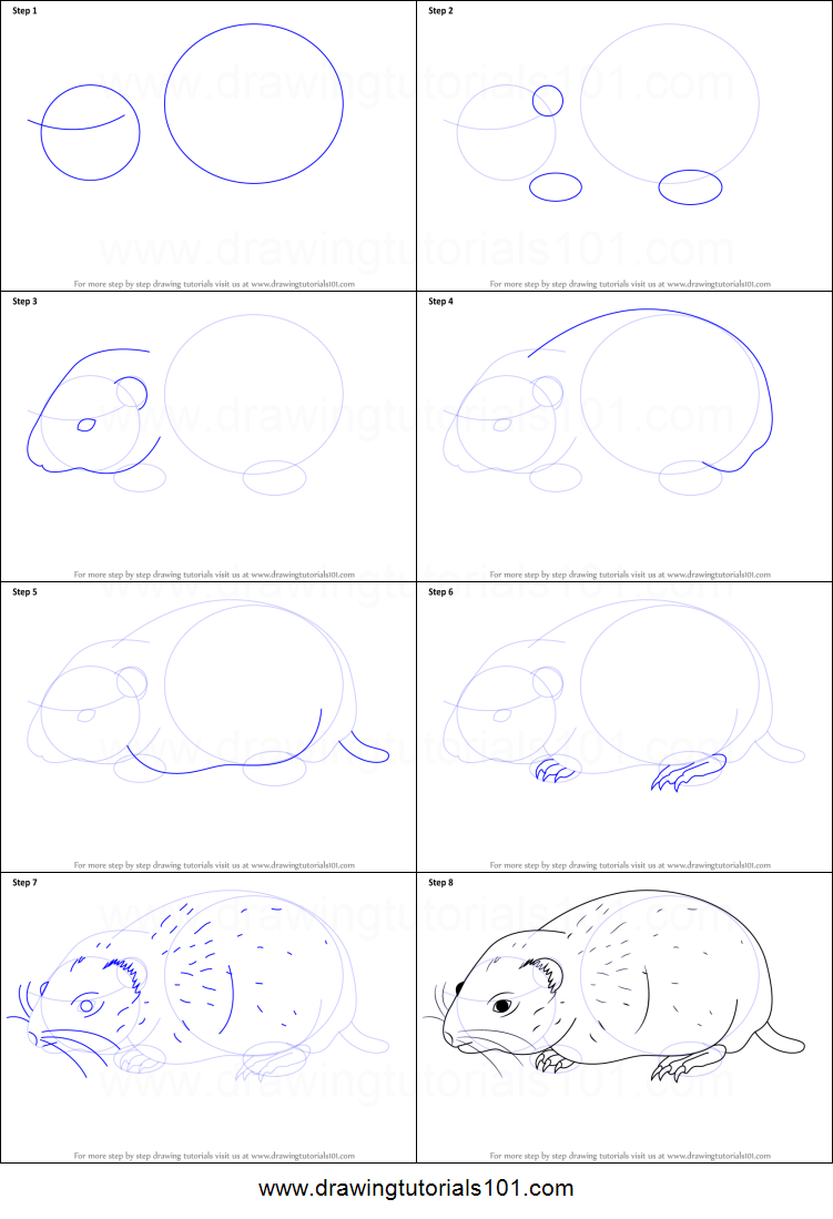 How to Draw an Arctic Lemming printable step by step ...