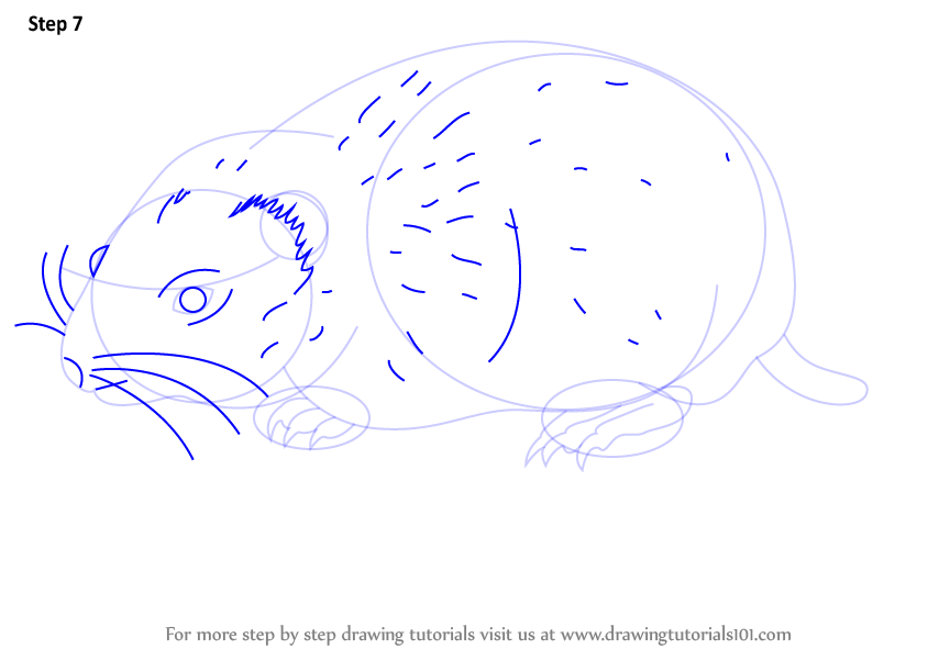 Learn How To Draw An Arctic Lemming Other Animals Step