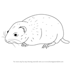 How to Draw an Arctic Lemming