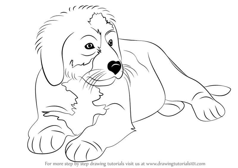 Learn How To Draw A Bernese Mountain Dog Other Animals Step By