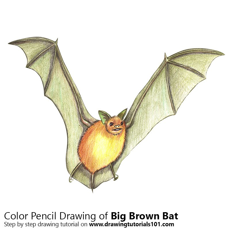 Big Brown Bat Color Pencil Drawing