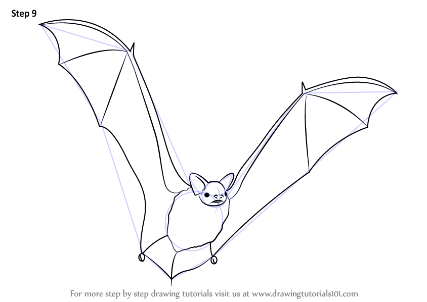 Learn how to draw a big brown bat other animals step by for How to draw a small bat