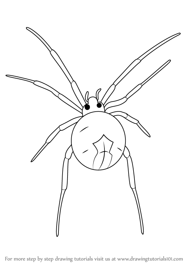 black widow spider coloring pages - learn how to draw a widow spider other animals step by
