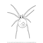 How to Draw a Widow Spider