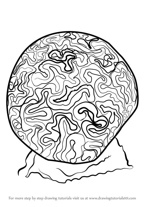 Learn How To Draw A Brain Coral Other Animals Step By Step