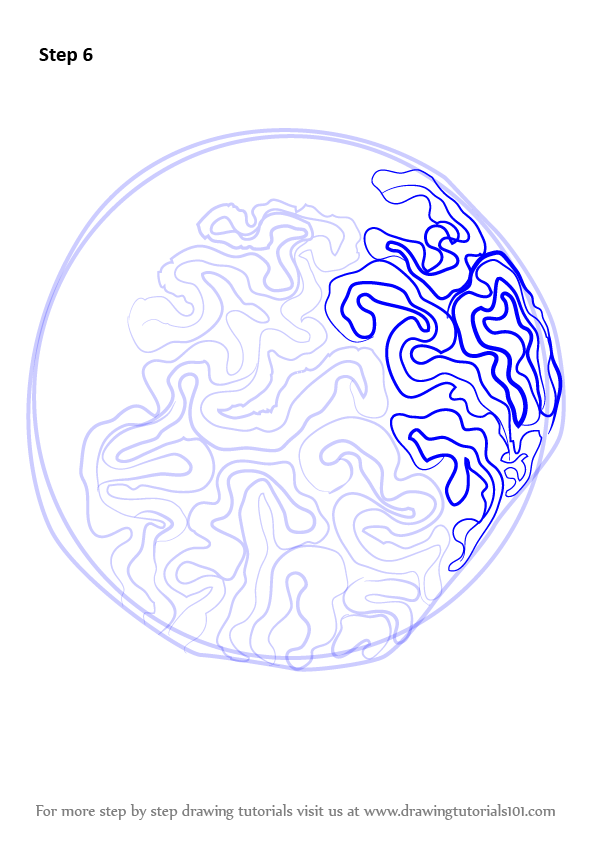 Step By Step How To Draw A Brain Coral