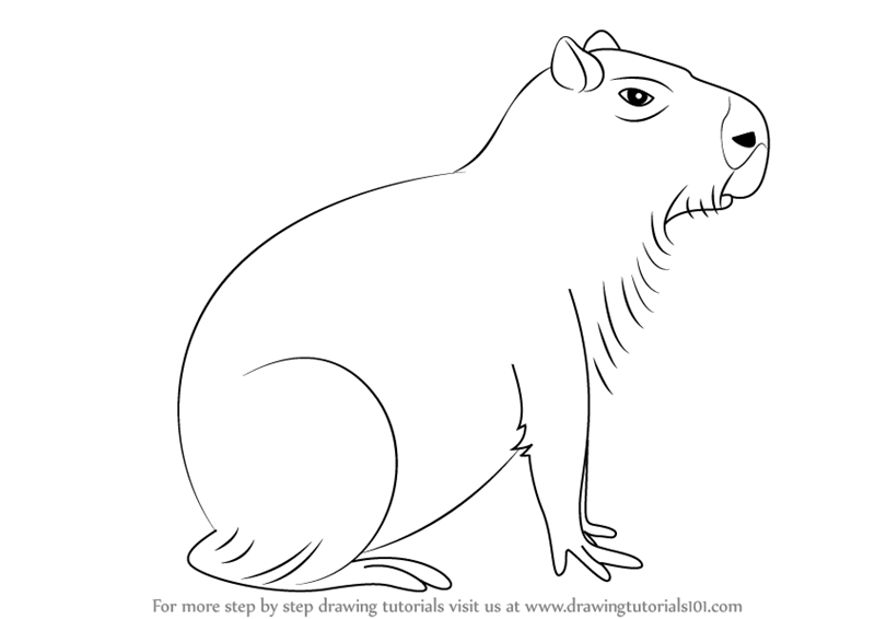 Learn How to Draw a Capybara (Other Animals) Step by Step
