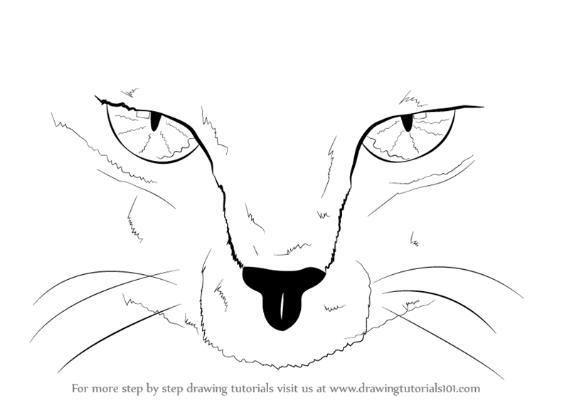 Learn How To Draw Scary Cat Eyes Other Animals Step By Step Drawing Tutorials