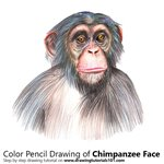 How to Draw Chimpanzee Face