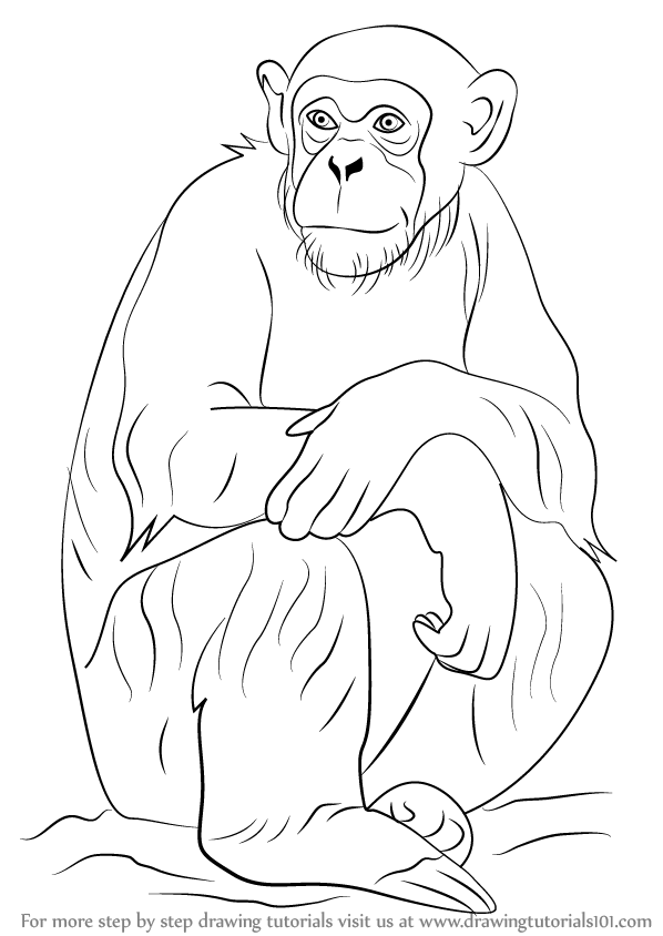 learn how to draw a chimpanzee other animals step by step