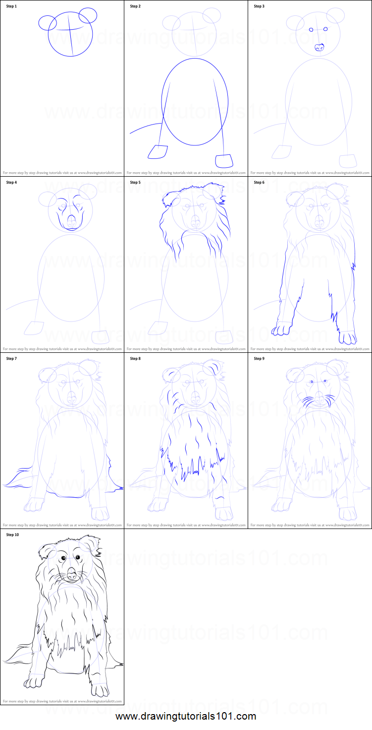 How To Draw A Collie Dog Printable Step By Step Drawing Sheet How To Draw A