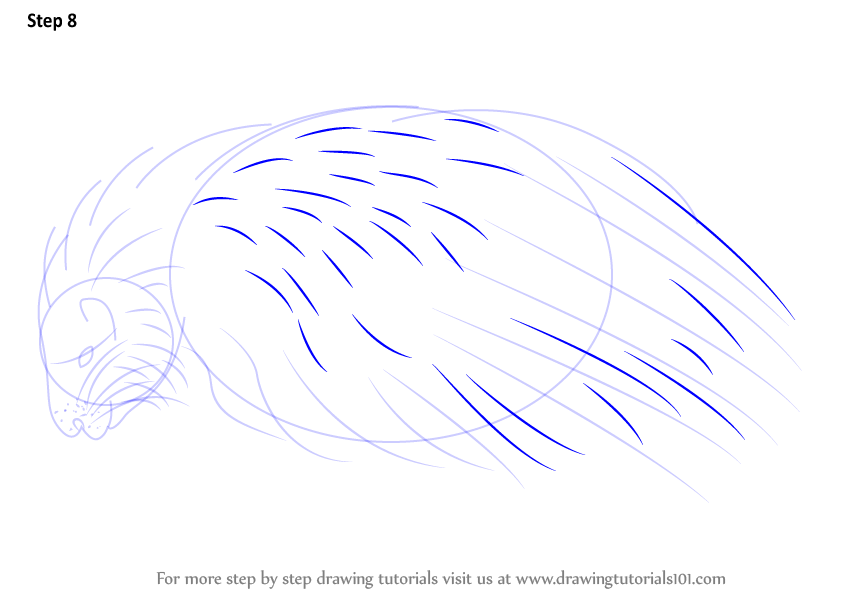 how to draw a realistic porcupine step by step