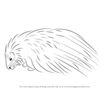 How to Draw a Crested Porcupine