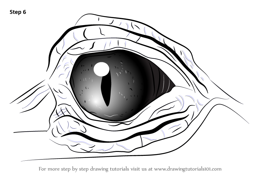 Learn How To Draw Crocodile Eyes Other Animals Step By Step